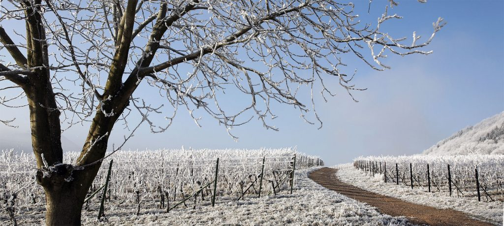 FK Winter Events in der Pfalz
