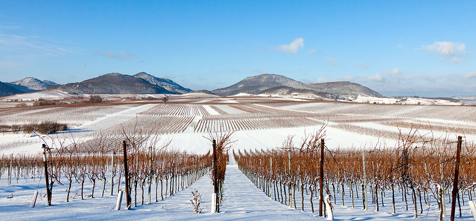 FK Winter Events in der Pfalz in strahlenden Weinbergen